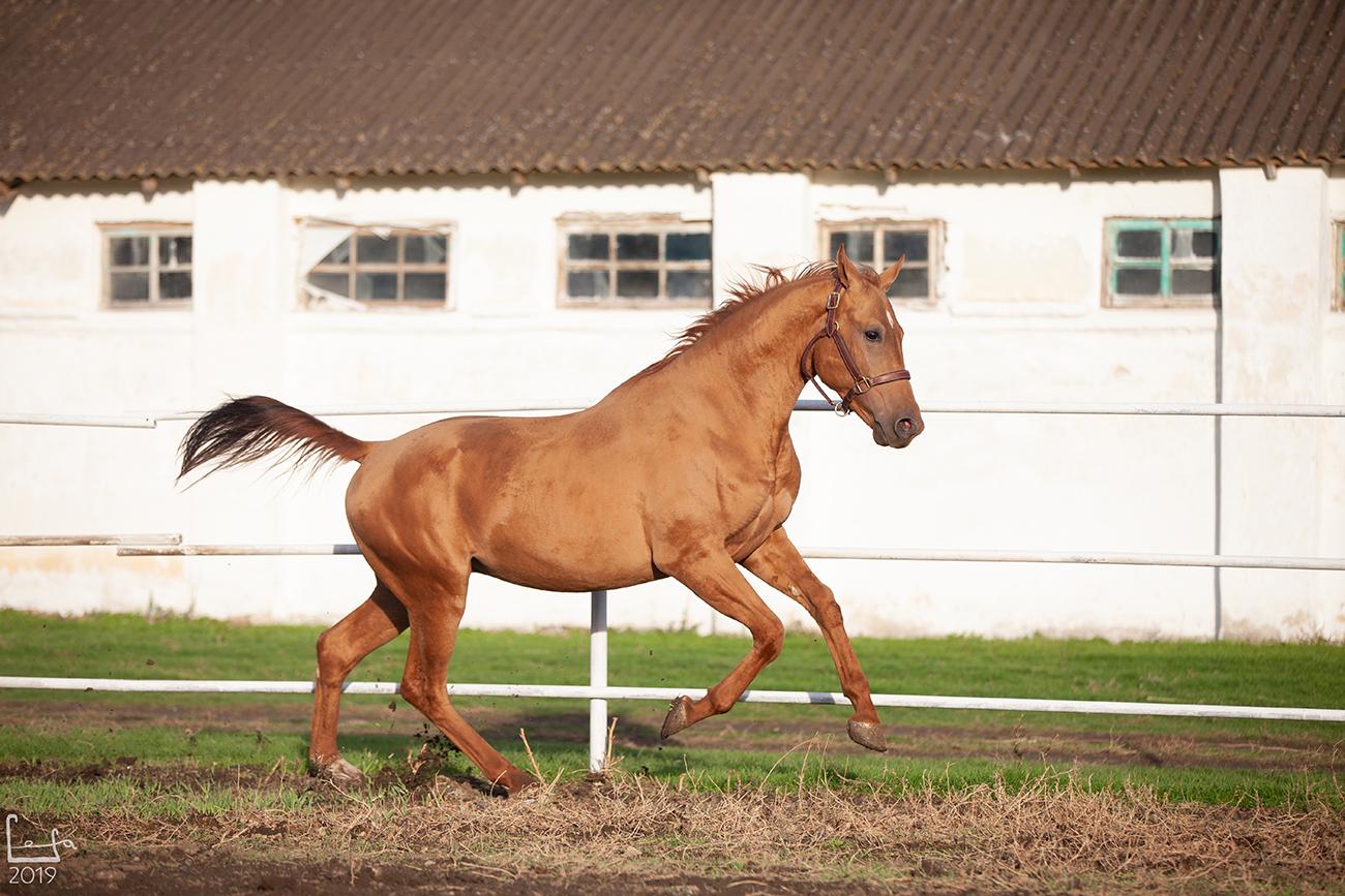 этом юловский конный завод фото звезд