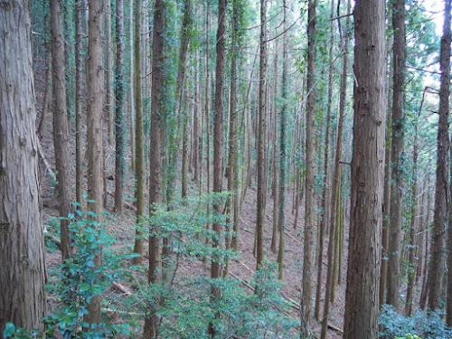 巻き道の樹林帯
