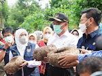 Larang Ekspor Katak Porang, Gubernur Khofifah Bersama Mentan dan Menko PMK Panen Porang di Madiun