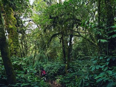 hutan gunung kembang