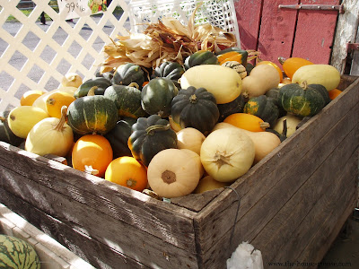 winter squash at the farm market