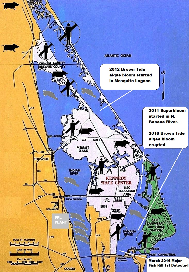 Last Day To Comment On Kscs Impact On Indian River Lagoon