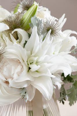white roselily varieties dalinda