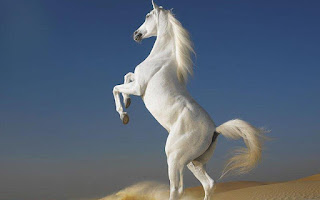 The World's Top 10 Horse Breeds That Everyone Admires To Have