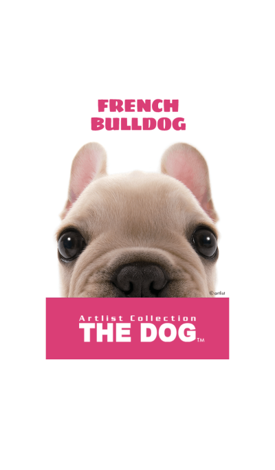 THE DOG French Bulldog 2