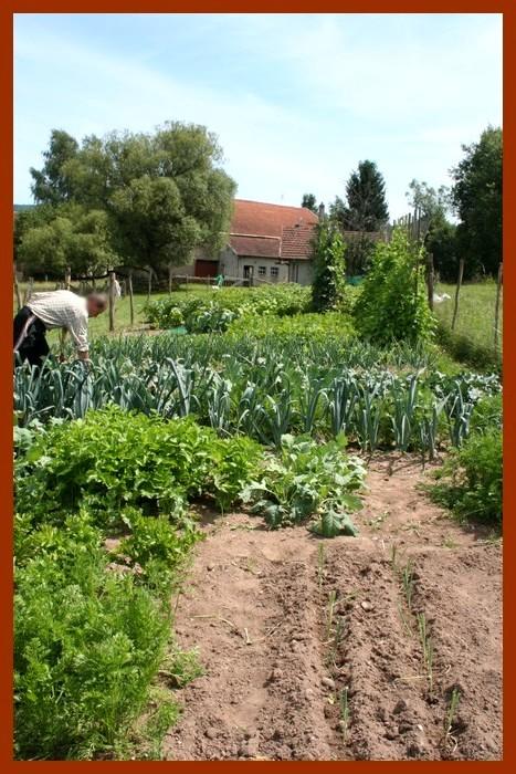 Aux jardins d 39 am lie juillet 2011 for Jardin 5 juillet biskra