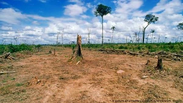Mais abrangente avaliação científica do ecossistema mundial afirma que nunca na história da Humanidade a natureza esteve em tamanho perigo