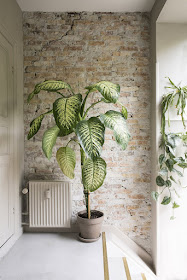 Make a statement with a large plant- design addict mom