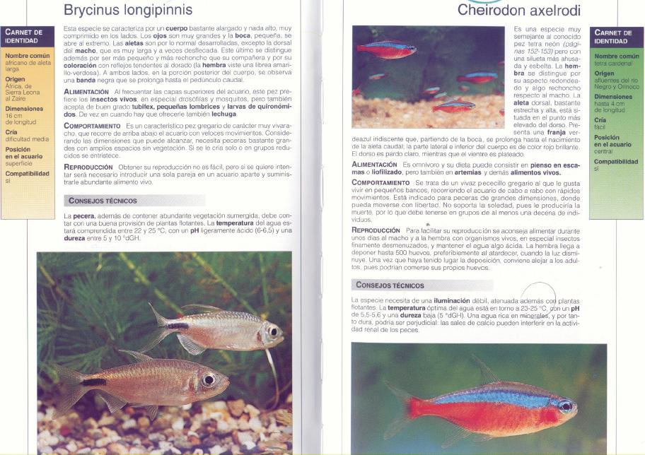 El Gran Libro de los Peces de Acuario [PDF][MEGA] - Identi