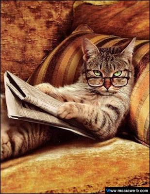 صور صور قطط كيوت 2020 خلفيات قطط جميلة جدا cats47.png