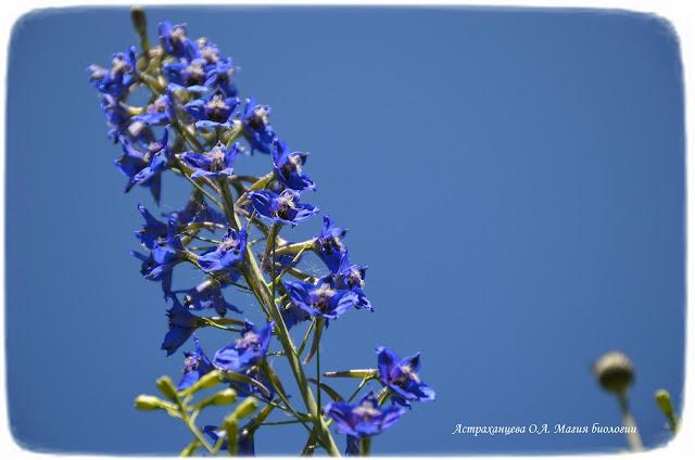 stroenie-okolocvetnika-i-chashechki-cvetka-magija-biologii-zhivokost-vysokaja