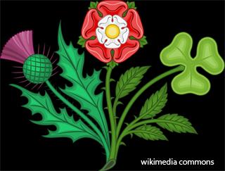 Красная букет роза как символ англии, невесты калл москва