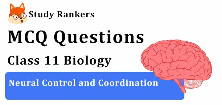MCQ Questions for Class 11 Biology: Ch 21 Neural Control and Coordination
