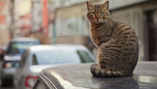 gatos danificam carro dona indenizar vitima
