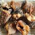 Tujuh Manfaat Membuat Ikan Gabus Sangat Baik Untuk Kesehatan