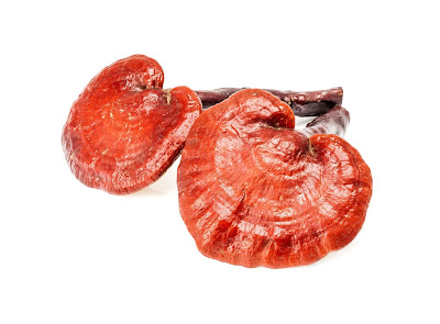 Ganoderma mushroom company in Odisha