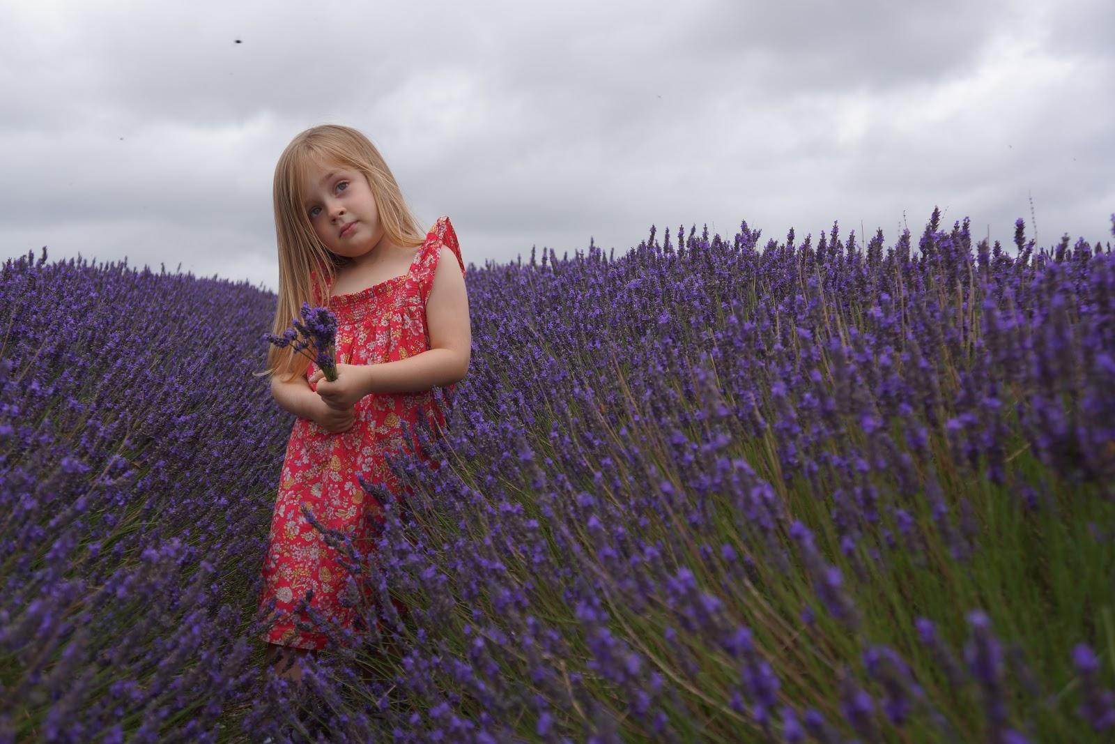 little girl standing on a lavender field