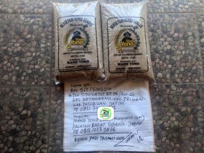 Benih padi yang dibeli   SIT Pasuruan, Jatim. (Sebelum packing karung ).