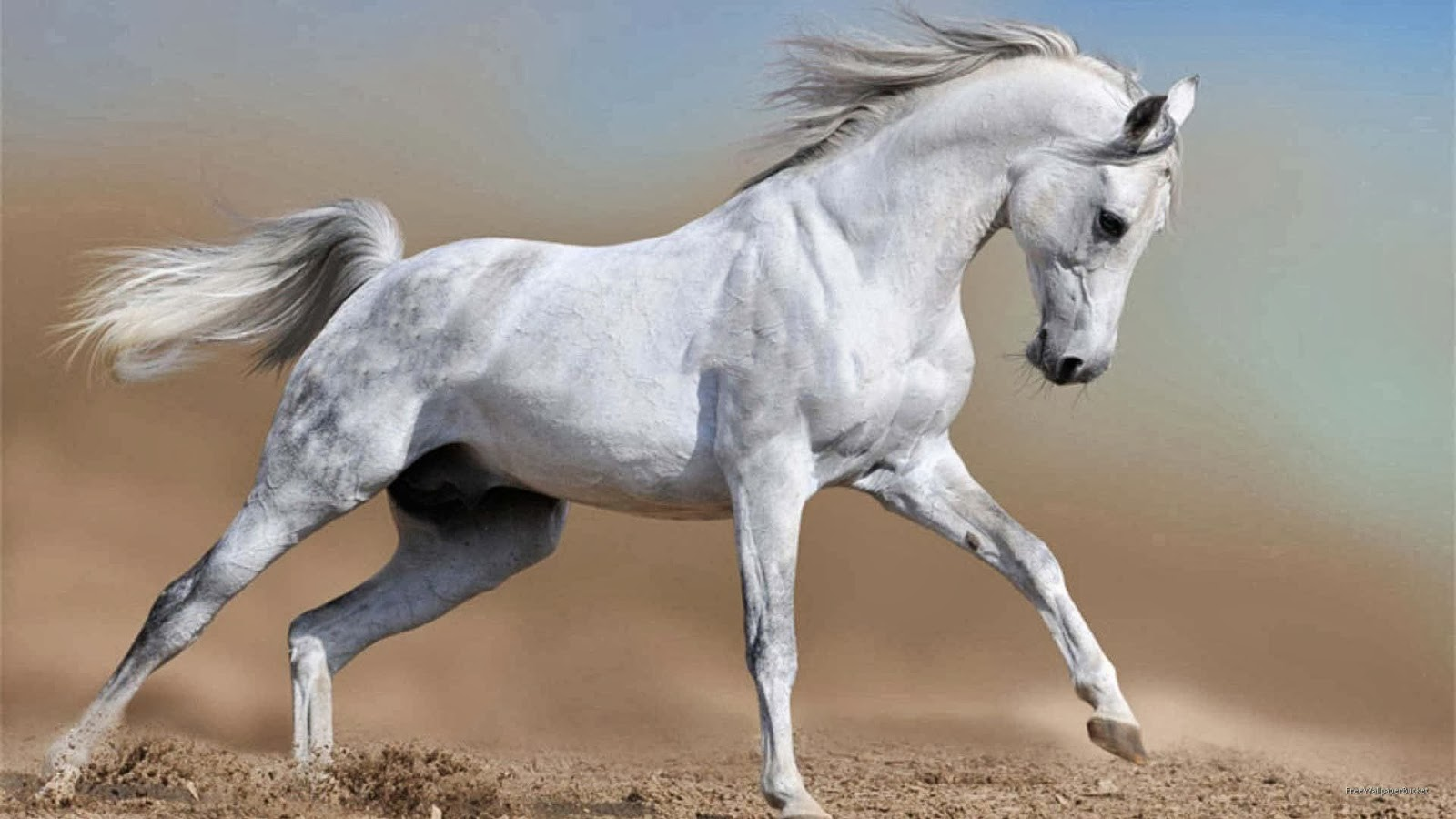 White running horses - photo#50