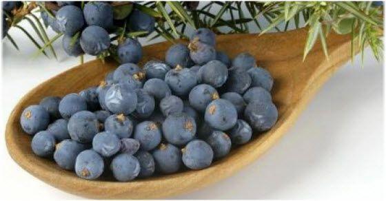 Juniper plant medicinal properties