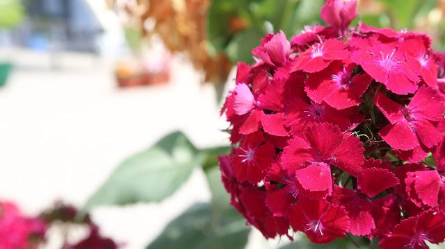 flowers-wallpaper-download