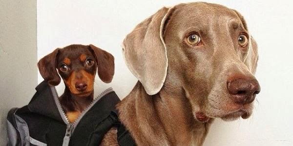 Idéias de Nomes para Cães