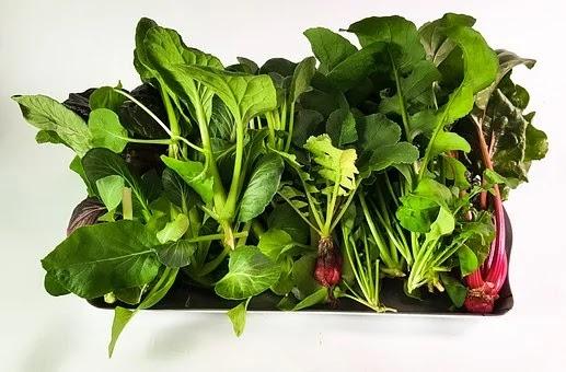 Apakah Sayuran Hidroponik Lebih Sehat Dari Sayuran Biasa?