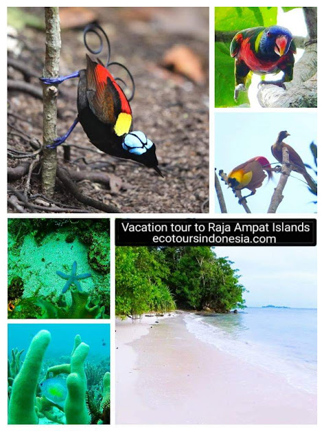 birds and coral reef in Raja Ampat