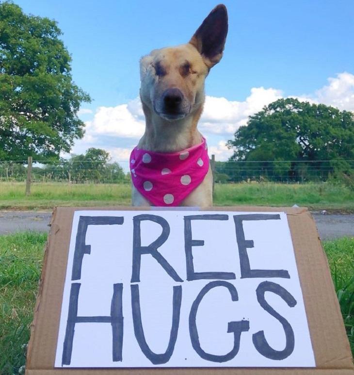 Free dog Hugs