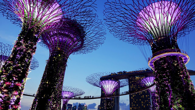 expats guide to singapore gardens by the bay