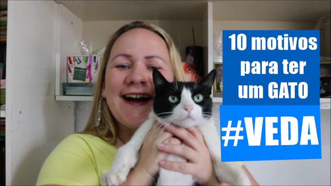 10 motivos para ter um gato!
