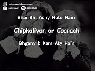 Bhai Behan Quotes in English