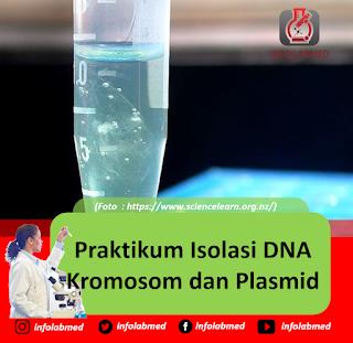 Praktikum Isolasi DNA Kromosom dan Plasmid