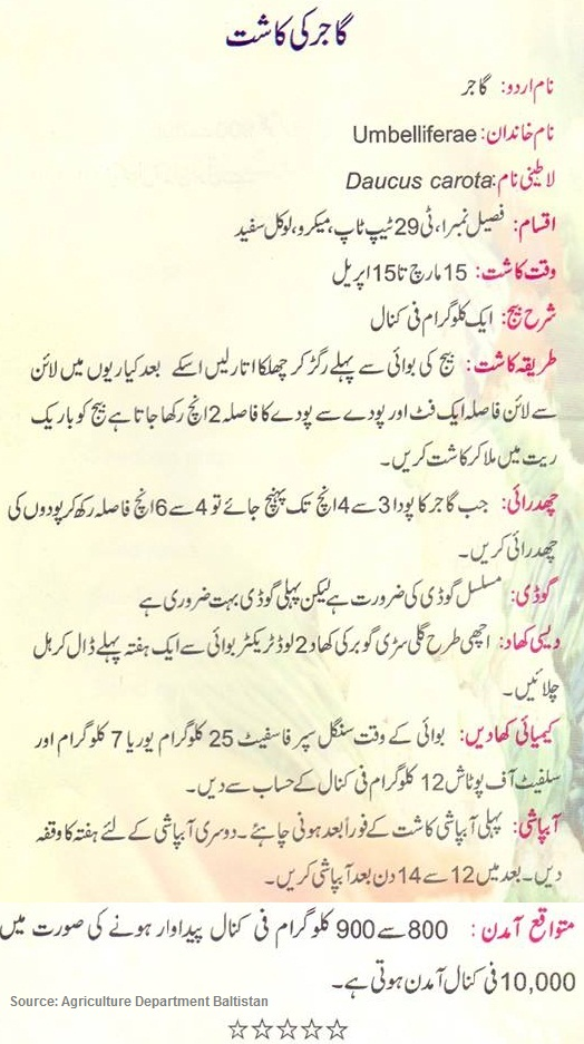 how to grow carrots in pakistan urdu guide noons info rh noonwalqalam blogspot com Facebook in Urdu Writing Wallpaper Funny Urdu Facebook
