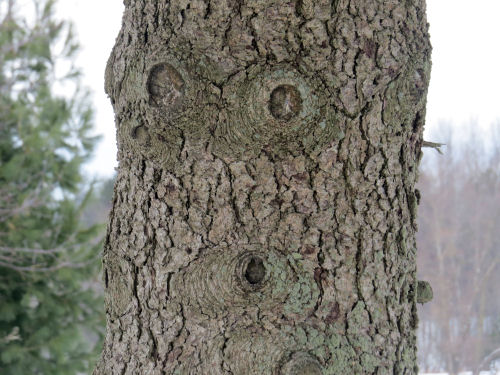 surprised face in tree