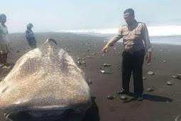 Viral! Nelayan Temukan Ikan Hiu Mirip Wajah Manusia di Rote