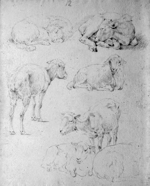 овца и коза нарисованные карандашом