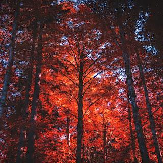 El color las hojas de los árboles en otoño