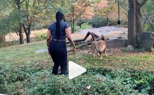 चिड़ियाघर में शेर के घेरे में कूदकर जब ये महिला करने लगी डांस - newsonfloor.com