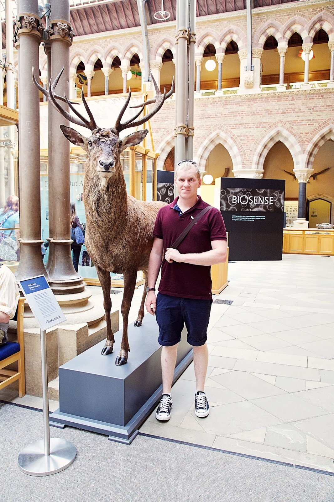 Taxidermy Stag at Oxford Museum of Natural History