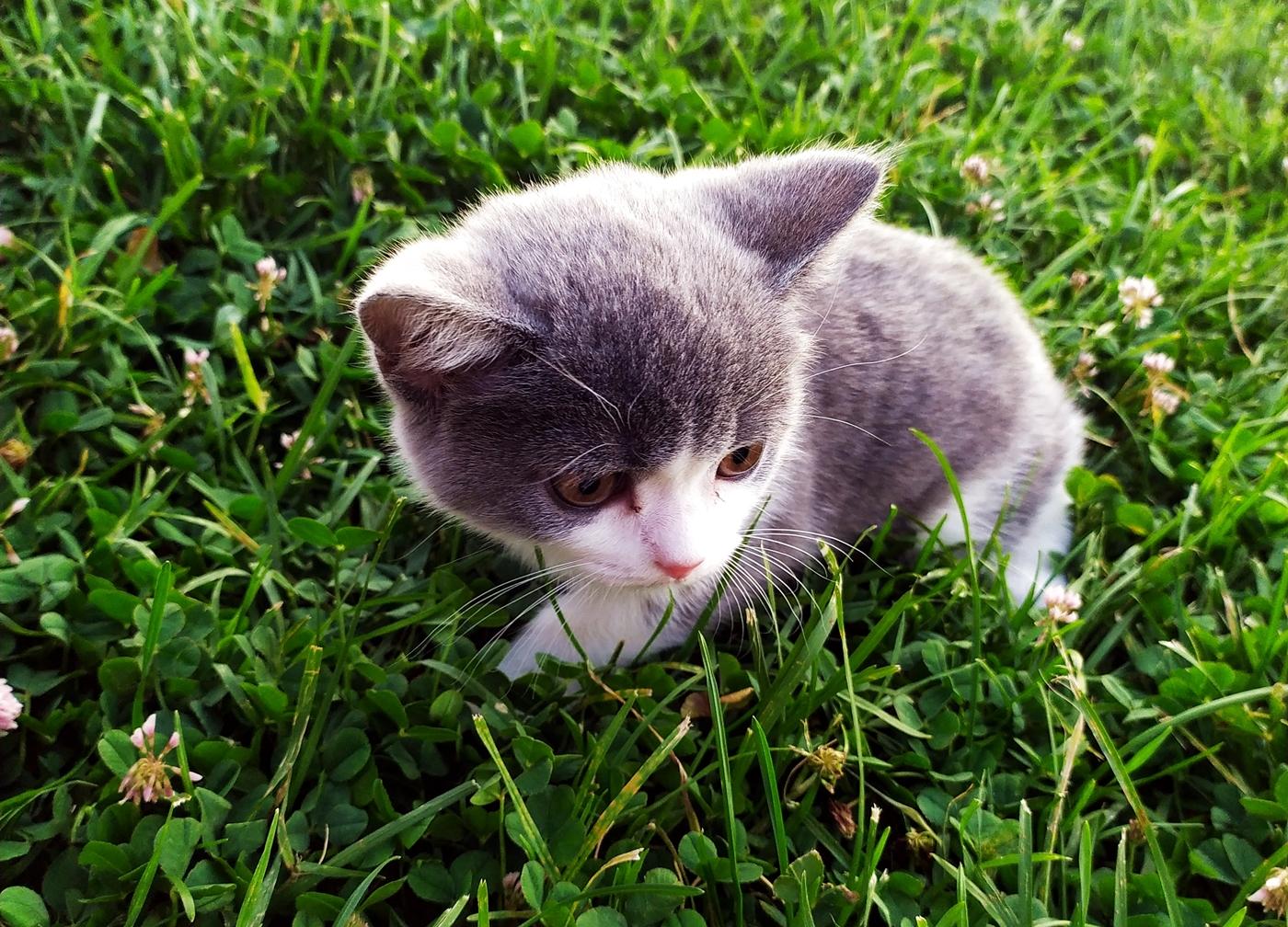 Cute Kittens, Grass