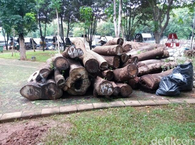 Misteri Mulai Tersingkap! Ini Sebagian Pohon Tebangan Revitalisasi Monas