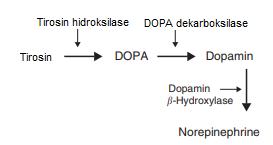 Biosintesis norepinefrin didalam tubuh