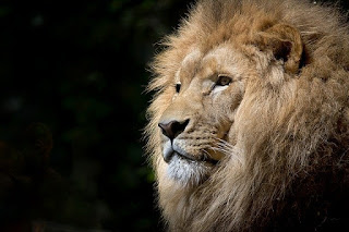 Pengertian Alpha Male pada Hewan dan Manusia