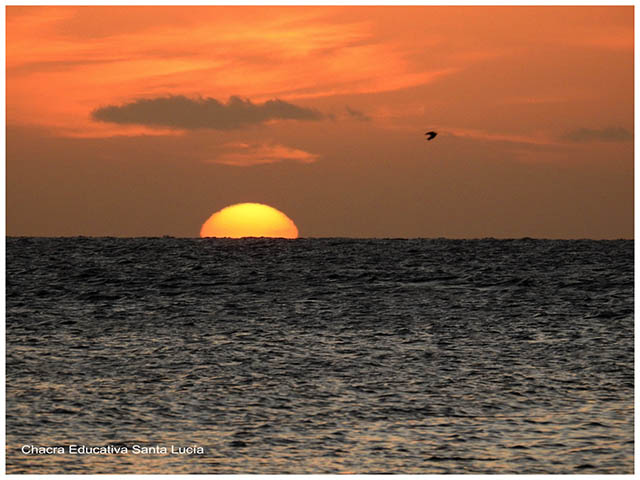 Atardecer con ave en el mar -Chacra Educativa Santa Lucía