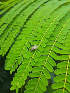 Biodiversity-definition