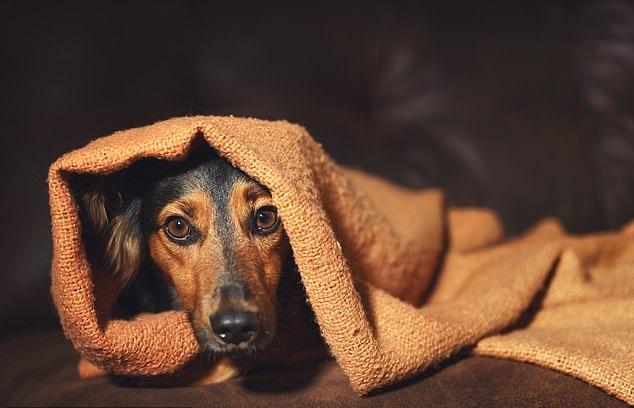 Σχεδόν τα τρία τέταρτα όλων των σκύλων πάσχουν από μια διαταραχή άγχους