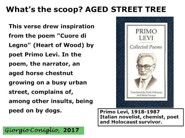 poem; Primo Levi; Heart of Wood; tree; Giorgio Coniglio