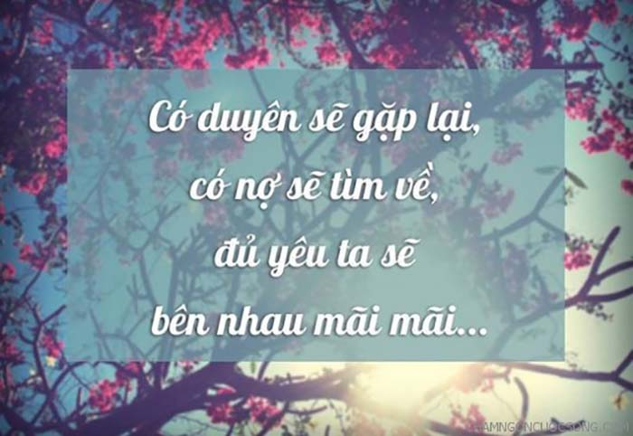 quote-tinh-yeu