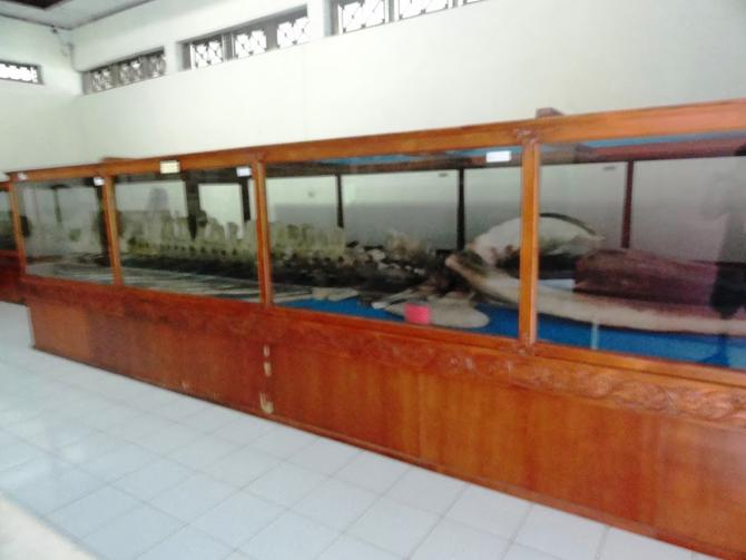 Kerangka ikan Jokotuo di museum RA Kartini